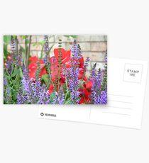 Purple Salvia and Red Amerylis Postcards