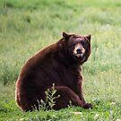 Large Black Bear by Luann wilslef