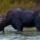 Thirsty Moose by Luann wilslef