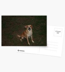 Snappy loves you Postcards