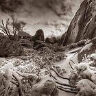 Dark winter, Mount Buffalo by Kevin McGennan