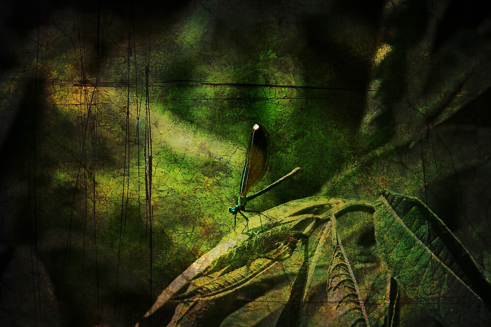 Dragonfly by MClementReilly