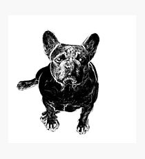 Dog Love > Cute Black & White Mastiff > Cool Dog Photographic Print