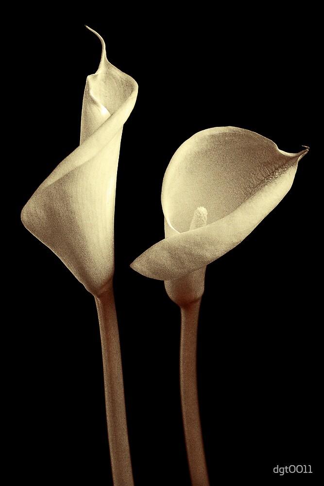 Calla Lilies Still Life by dgt0011