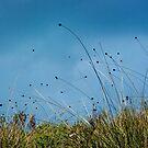 Button Grass Plains by Rhana Griffin