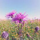 Purple Haze by Karen Stahlros