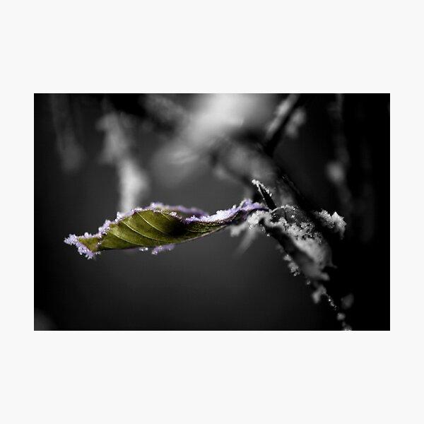 Leaf it Photographic Print