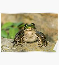 Green Frog Poster