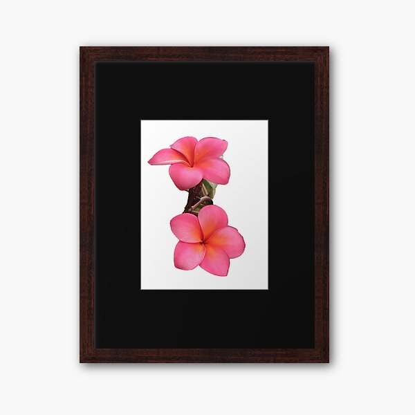 Frangipani Flowers Framed Art Print