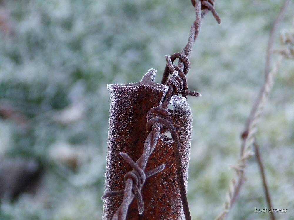 Frosty Iron by bushdrover