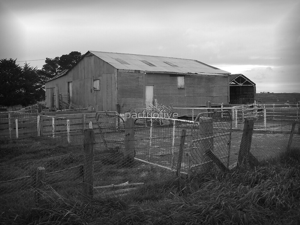 shearing shed by partyofive