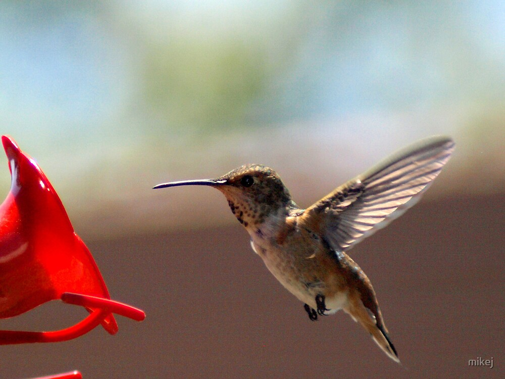 Hummer by mikej