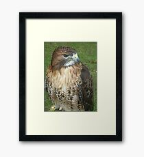 Caerphilly's Falcons Framed Print