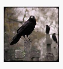 Cemetery Crows Photographic Print