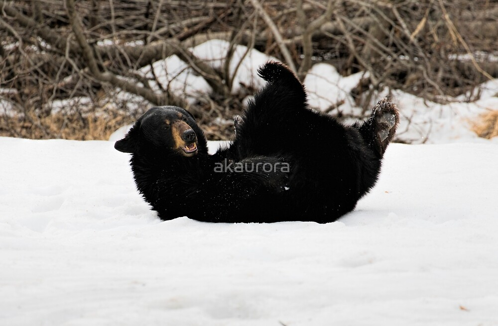 Play Time - Black Bear by akaurora