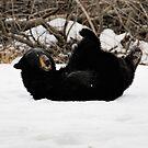 Play Time - Black Bear by akaurora