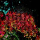 Dream by solareclips~Julie  Alexander