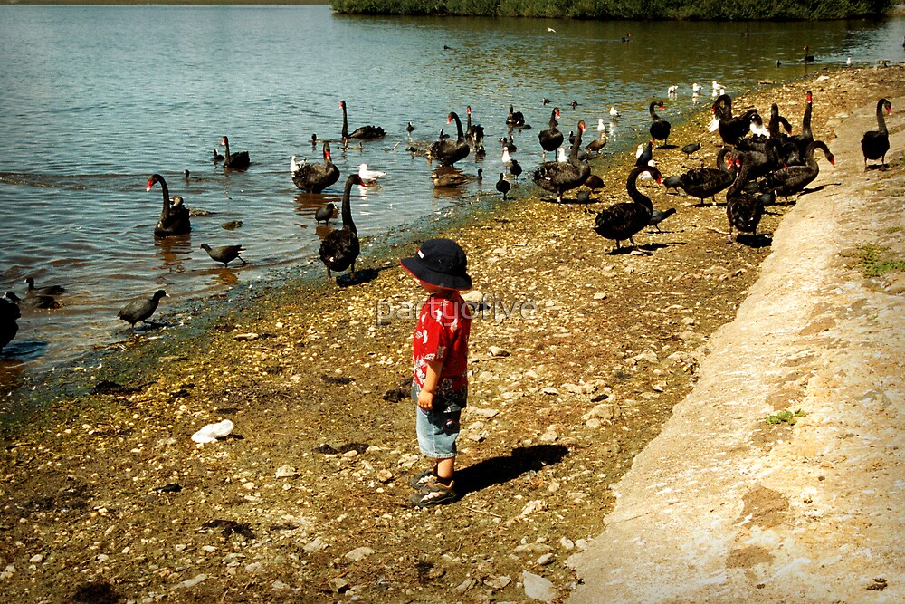 duck season?? by partyofive