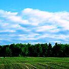 Across the Fields... by shellyb