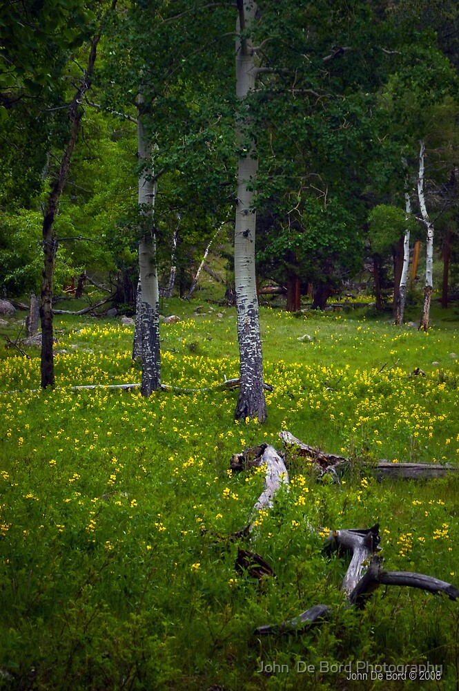 Wildflowers Forests by John  De Bord Photography