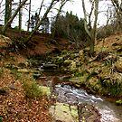 River Rye by Trevor Kersley
