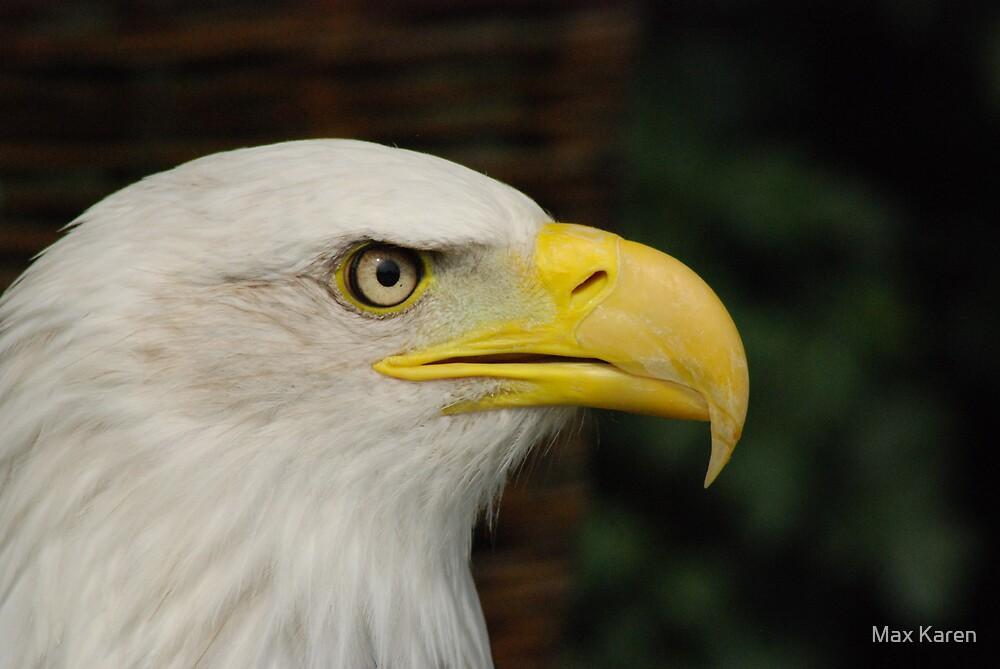 Eagle Eye by Max Karen