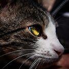 Cat by Avantgarda