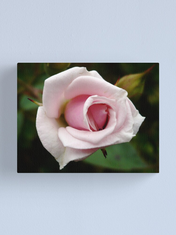 Alternate view of A Rose by any other name... Canvas Print