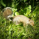*SQUIRREL IN FRONT OF BLACKBERRY VINES* by Dayonda
