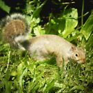 SQUIRREL WITH RACING STRIPE by Dayonda