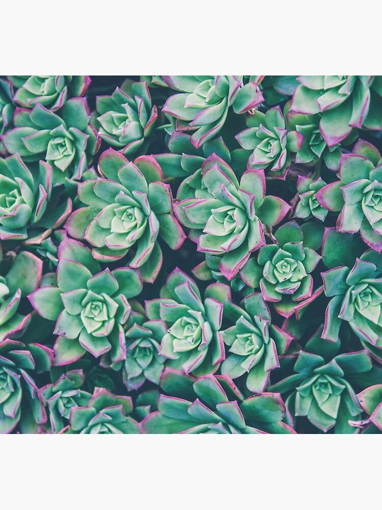 succulent garden by bellehibou