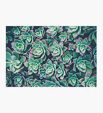 succulent garden Photographic Print