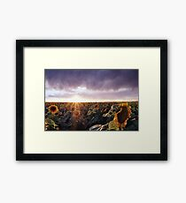 Sunflower Sunburst Framed Print