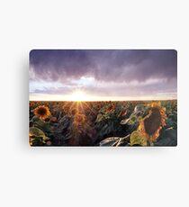 Sunflower Sunburst Metal Print