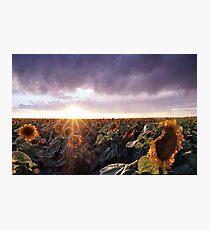 Sunflower Sunburst Photographic Print