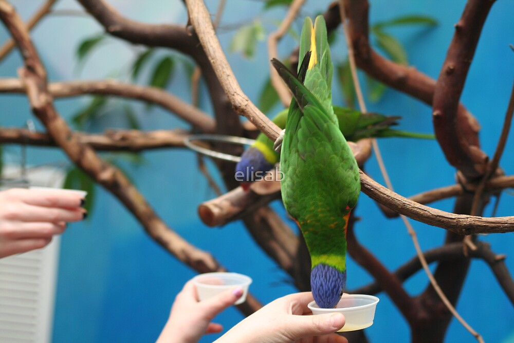 Hungry Bird by elisab