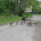 Make Way for Goslings by Kinniska