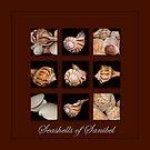 Seashells of Sanibel by Bonnie T.  Barry