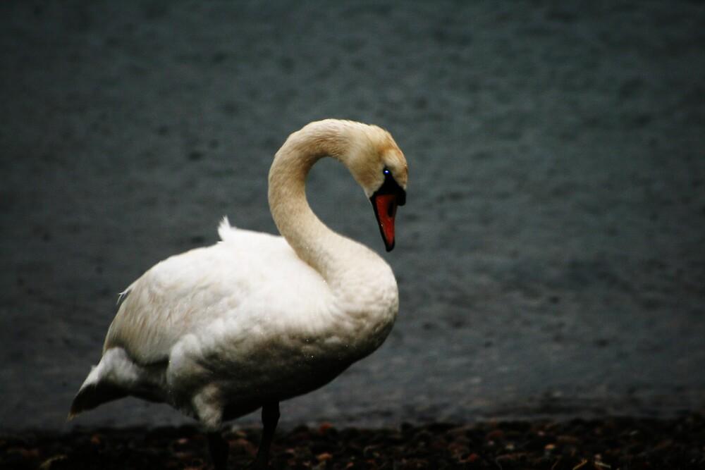 Eye of the Swan by yusstay