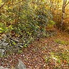 Appalachian Rock Wall by Gary L   Suddath