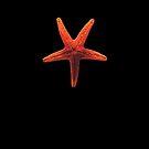 The Starfish by Denis Marsili
