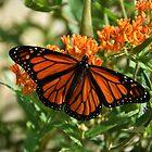 Orange is the new black _ Monarch! by Poete100