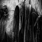 The Tree Bark Collection # 31 - The Magic Tree by Philip Johnson