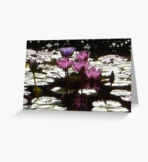 Waterlillies in the sun Greeting Card