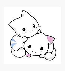Cute kitten pair Photographic Print