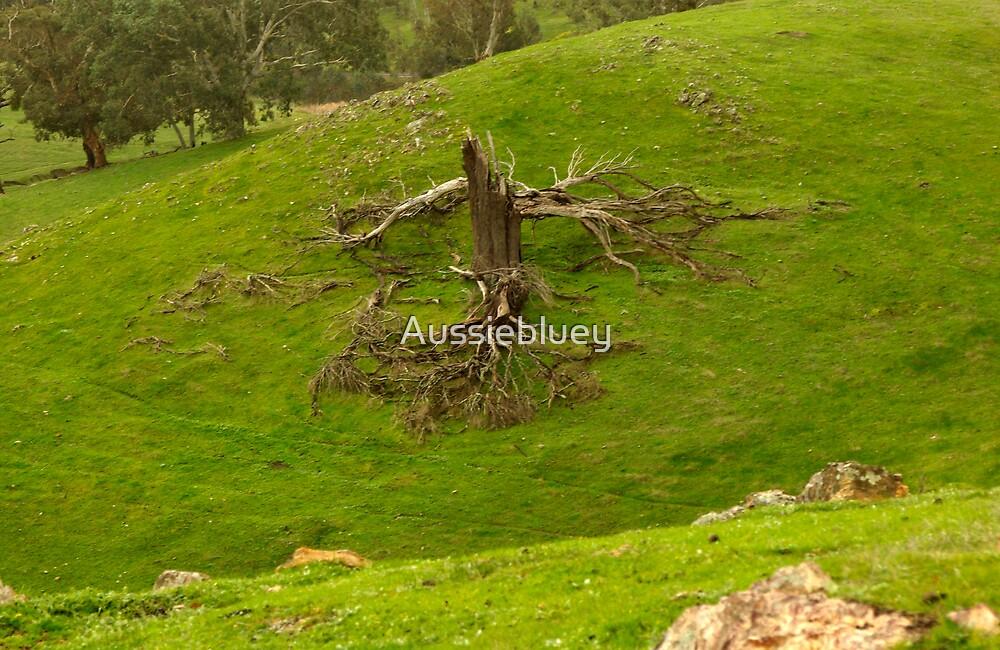 Old Stump. by Aussiebluey