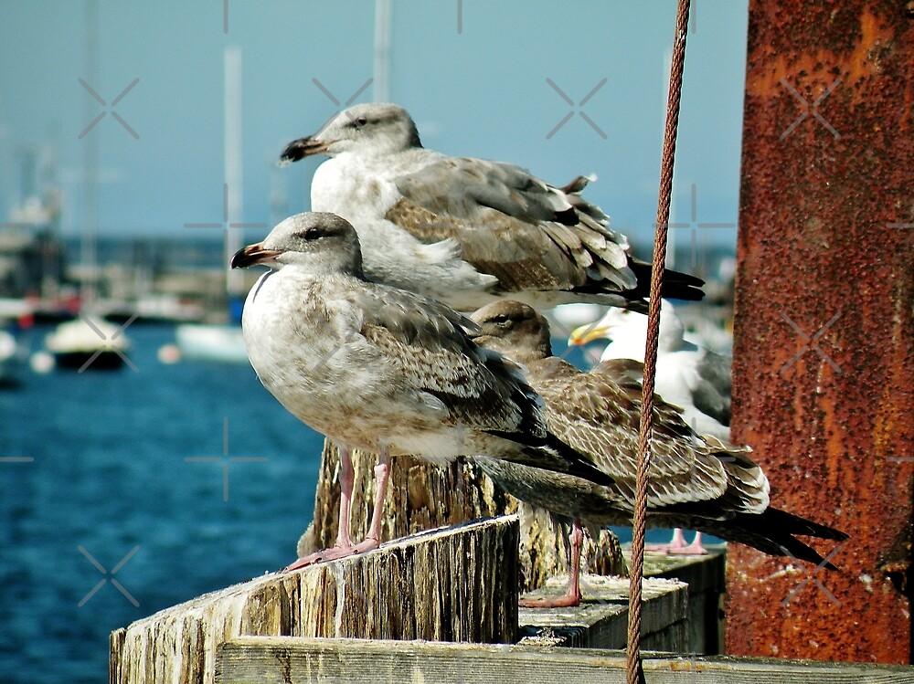 Seagull Aristocracy by Martha Sherman