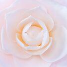 Camellia by Keith G. Hawley