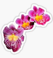 Triplet Orchid Sticker Sticker