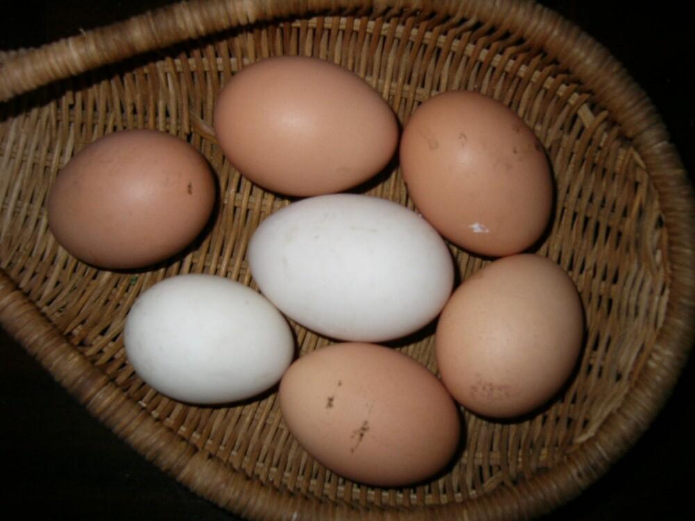 Ducks Egg by davescott241